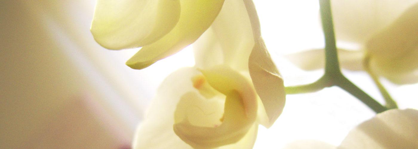 fiori-bianchi3