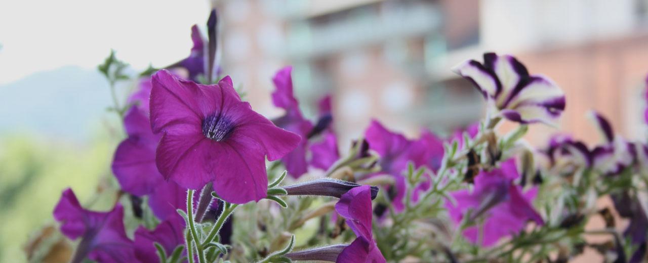 fiori-sul-balcone